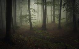 Σκοτεινό φυσικό δάσος με την ομίχλη και την πράσινη βλάστηση Στοκ εικόνες με δικαίωμα ελεύθερης χρήσης