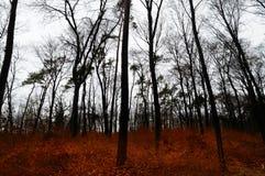 Σκοτεινό χειμερινό δάσος με τα κόκκινα φύλλα στο έδαφος Στοκ φωτογραφίες με δικαίωμα ελεύθερης χρήσης