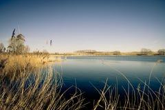 σκοτεινό ύδωρ βλάστησης κίτρινο Στοκ Εικόνα