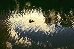 σκοτεινό ύδωρ Στοκ Φωτογραφία