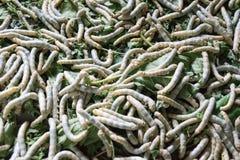 Σκουλήκια μεταξιού στο SAN Kampheng στην Ταϊλάνδη Στοκ Εικόνα