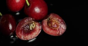 Σκουλήκια φρούτων στο σάπιο κεράσι, μαύρο υπόβαθρο Προνύμφη των μυγών κερασιών closeup απόθεμα βίντεο