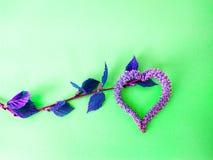 Σκουλαρίκια ανθών λουλουδιών σημύδων υπό μορφή καρδιάς στοκ εικόνα με δικαίωμα ελεύθερης χρήσης