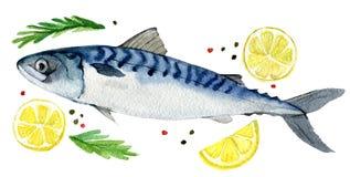 Σκουμπρί με το πιπέρι λεμονιών και χορτάρια που απομονώνονται στο λευκό, απεικόνιση watercolor διανυσματική απεικόνιση
