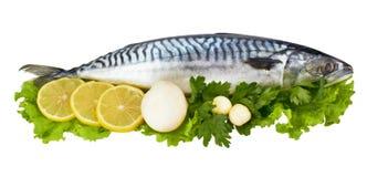 σκουμπρί ψαριών Στοκ φωτογραφία με δικαίωμα ελεύθερης χρήσης