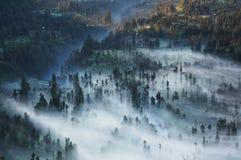 Σκουπίσματα υδρονέφωσης μέσω του δάσους Στοκ φωτογραφίες με δικαίωμα ελεύθερης χρήσης