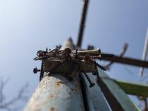 Σκουριασμένες βίδες στο μαγνήτη στο στυλοβάτη σιδήρου στην οδό ενάντια στον ουρανό στοκ εικόνες