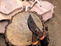 Σκουριασμένοι καλλιεργώντας κουρευτές ζώων που στηρίζονται ενάντια στο ξύλινο κούτσουρο Στοκ Φωτογραφίες