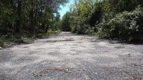 Σκουριασμένος εγκαταλειμμένος συγκεκριμένος δρόμος στο δάσος που βλασταίνεται ακόμα με τη μετακίνηση αέρα στα δέντρα Ταξίδι, τέλο απόθεμα βίντεο