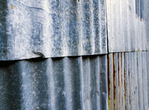 Σκουριασμένος ζαρωμένος γαλβανισμένος φράκτης φύλλων στοκ εικόνες
