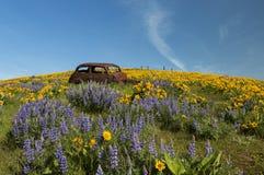 Σκουριασμένο αυτοκίνητο και άγρια λουλούδια Στοκ φωτογραφίες με δικαίωμα ελεύθερης χρήσης