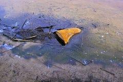 Σκουριασμένο βαρέλι μετάλλων που προεξέχει μερικώς από το ελώδες έδαφος με τα υπόλοιπα των πετρελαιοειδών Στοκ Φωτογραφίες