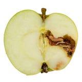 Σκουλήκι που τρώει τη Apple στο άσπρο υπόβαθρο Στοκ Φωτογραφία