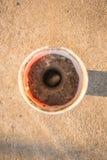 Σκουλήκι Xylotrupes Gideon Στοκ Εικόνες