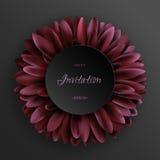 Σκούρο κόκκινο λουλούδι gerbera στο μαύρο πρότυπο υποβάθρου Στοκ Φωτογραφίες