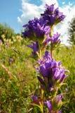 Σκούρο μπλε λουλούδια Στοκ Εικόνες