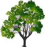 Σκούρο πράσινο δέντρο με πολλούς κλάδους Στοκ φωτογραφία με δικαίωμα ελεύθερης χρήσης