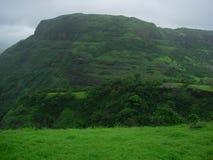 σκούρο πράσινο μουσώνας στοκ εικόνες