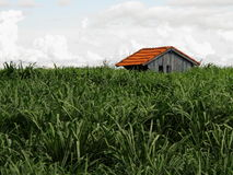 Σκούρο πράσινο χλόη Στοκ φωτογραφία με δικαίωμα ελεύθερης χρήσης