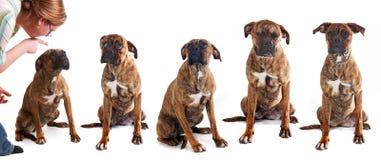 σκυλάκι άτακτο Στοκ φωτογραφίες με δικαίωμα ελεύθερης χρήσης