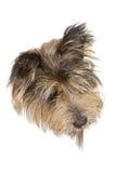 σκυλάκι εμβλημάτων Στοκ Εικόνα