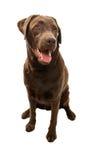 σκυλάκι ευτυχές Στοκ εικόνα με δικαίωμα ελεύθερης χρήσης