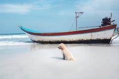 Σκυλάκι παραλιών με τη βάρκα Στοκ εικόνες με δικαίωμα ελεύθερης χρήσης