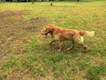 Σκυλάκι που έχει πραγματικά τη διασκέδαση υπαίθρια στοκ φωτογραφία με δικαίωμα ελεύθερης χρήσης