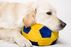 σκυλάκι που κουράζεται Στοκ φωτογραφία με δικαίωμα ελεύθερης χρήσης