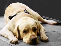 σκυλάκι που κουράζετα&io στοκ φωτογραφία