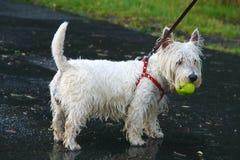 σκυλάκι υγρό Στοκ φωτογραφίες με δικαίωμα ελεύθερης χρήσης