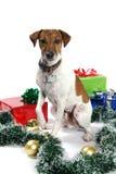 σκυλάκι Χριστουγέννων εύ Στοκ Φωτογραφία