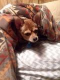 σκυλάκι Στοκ εικόνα με δικαίωμα ελεύθερης χρήσης