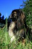 σκυλάκι Στοκ εικόνες με δικαίωμα ελεύθερης χρήσης