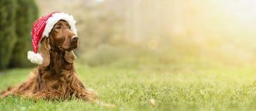 Σκυλί Άγιου Βασίλη Χριστουγέννων στοκ φωτογραφία με δικαίωμα ελεύθερης χρήσης