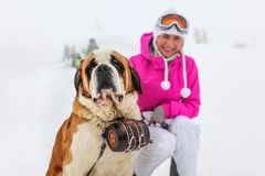 Σκυλί Αγίου Bernard με την εικονική συνεδρίαση βαρελιών στο χιόνι με το BL στοκ φωτογραφία