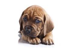σκυλί ανασκόπησης ευτυ&c Στοκ Εικόνες
