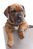 σκυλί ανασκόπησης ευτυ&c Στοκ Φωτογραφία