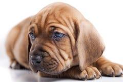 σκυλί ανασκόπησης ευτυ&c Στοκ Εικόνα
