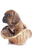 σκυλί ανασκόπησης ευτυ&c Στοκ φωτογραφία με δικαίωμα ελεύθερης χρήσης