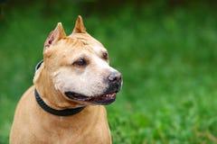 σκυλί ανασκόπησης πράσιν&omicro Στοκ φωτογραφία με δικαίωμα ελεύθερης χρήσης