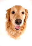 σκυλί αστείο στοκ εικόνα με δικαίωμα ελεύθερης χρήσης