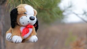 Σκυλί βελούδου στους κλάδους πεύκων φιλμ μικρού μήκους