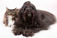 σκυλί γατών Στοκ εικόνα με δικαίωμα ελεύθερης χρήσης