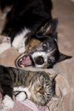 σκυλί γατών στοκ φωτογραφίες με δικαίωμα ελεύθερης χρήσης