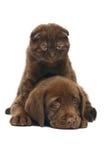 σκυλί γατών Στοκ Εικόνα