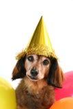 σκυλί γενεθλίων Στοκ εικόνες με δικαίωμα ελεύθερης χρήσης