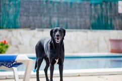 Σκυλί δίπλα στη λίμνη σπιτιών Στοκ Φωτογραφίες