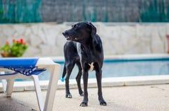 Σκυλί δίπλα στη λίμνη σπιτιών Στοκ φωτογραφία με δικαίωμα ελεύθερης χρήσης
