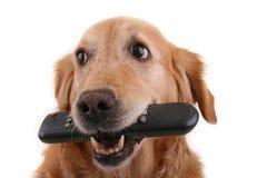 σκυλί ελέγχου απομακρ&upsi Στοκ Φωτογραφία
